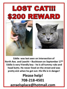 Eddie – Lost Cat!