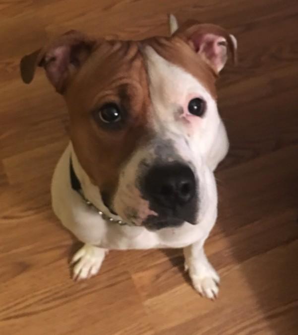 Meet Zoe