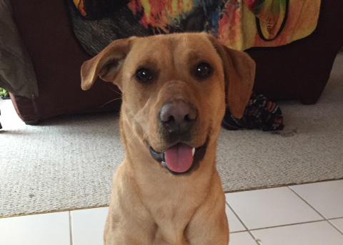 Meet Riley
