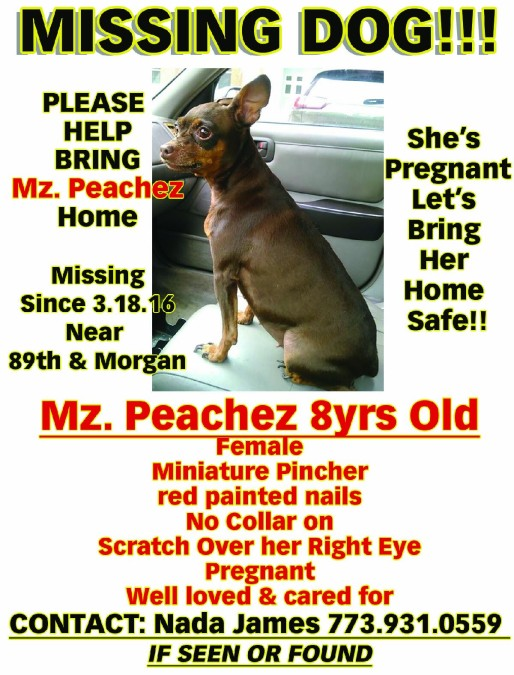 Peachez – Lost Dog!