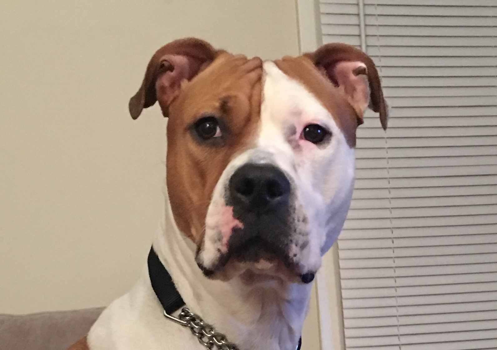 Zoe-adoption pending