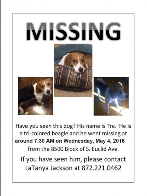Tre – Lost Dog!