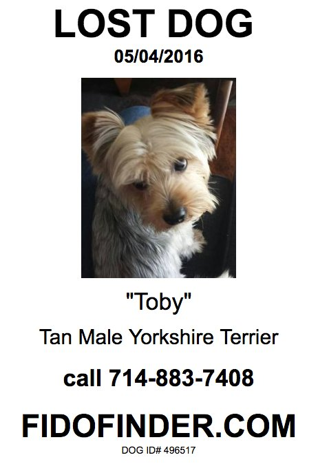 Toby – Lost Dog!