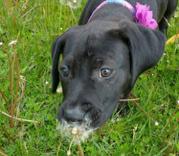 Meet Derby-adoption pending