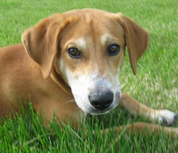 Meet Duke-I won't be at Saturday's adoption event!