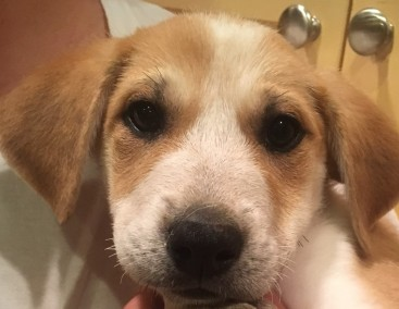 Meet Mabel