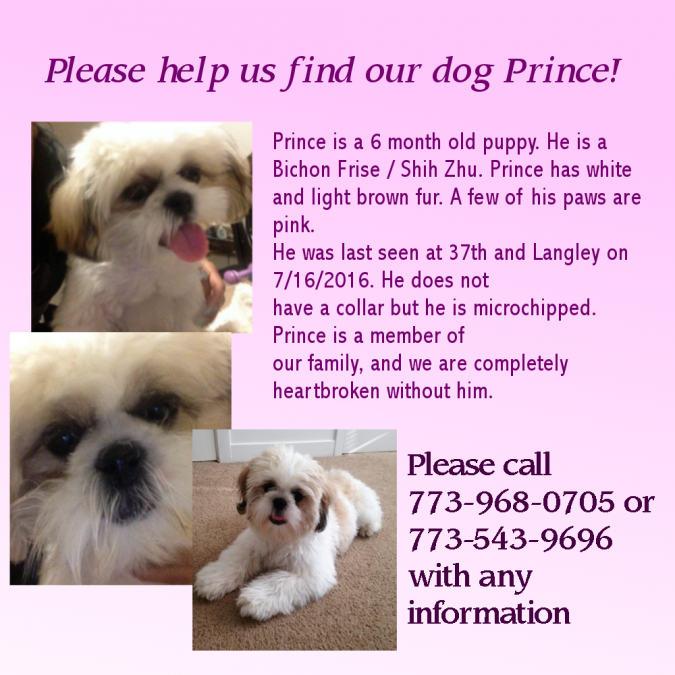 Prince – Lost Dog!