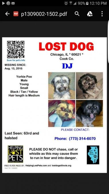 DJ – Lost Dog!