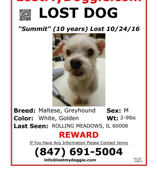 Summit-Lost Dog