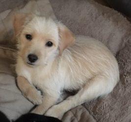 Meet Taffy