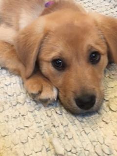 Lucky Dog Rescue Chicago