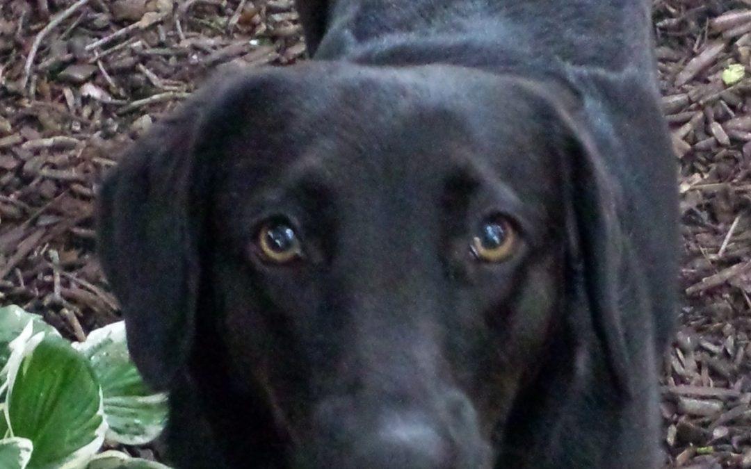Bella – Lost Dog!