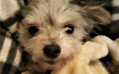 Meet Mollie-adoption pending