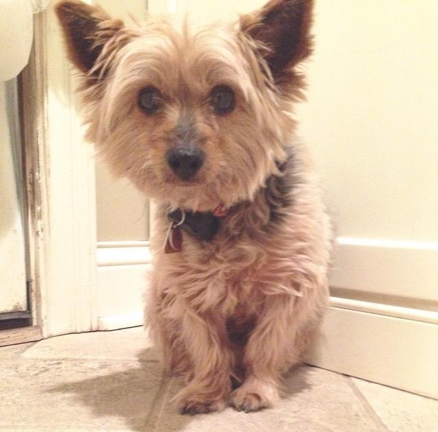 Jessie – Lost Dog!