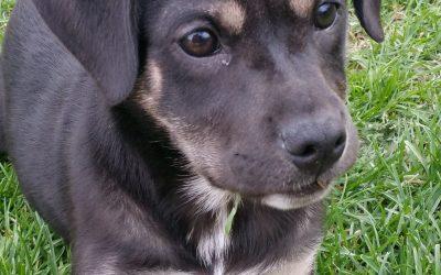 Meet Aspen