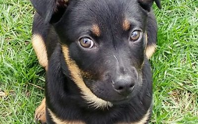 Meet Ryder-adoption pending