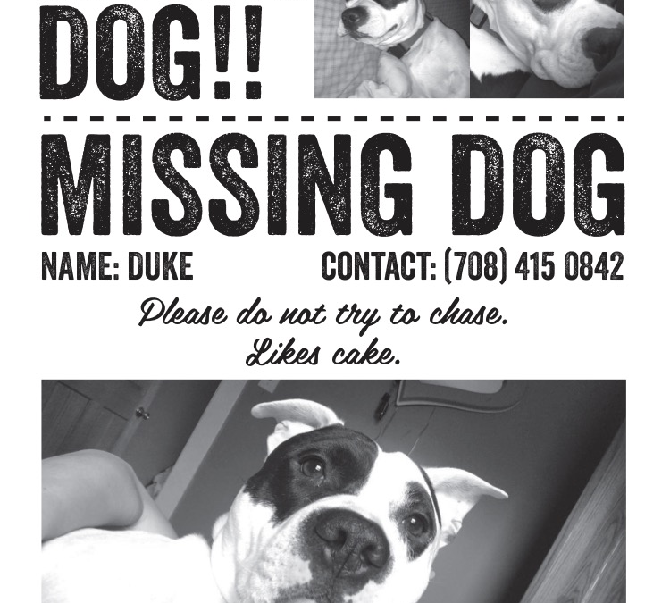 Duke – Lost Dog!