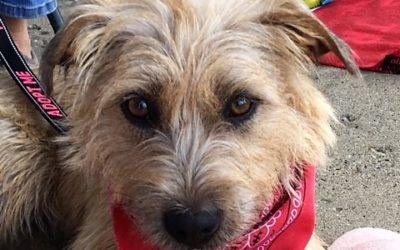 Meet Izzy-adoption pending