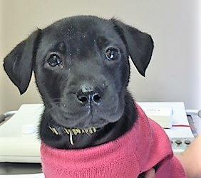 Meet Bailey 2