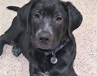 Meet Guinness-adoption pending