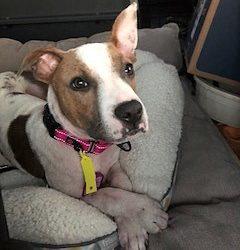 Meet Brayleigh