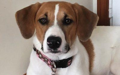 Meet Lucy-adoption pending