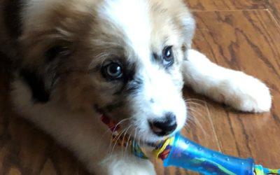 Meet Aspen-adopted