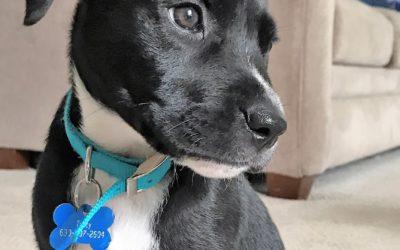 Meet Scout