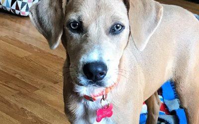 Meet Sophie Mae-adopted