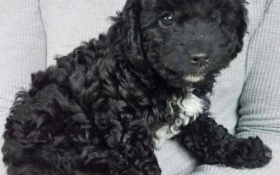 Meet Sonny-adoption pending