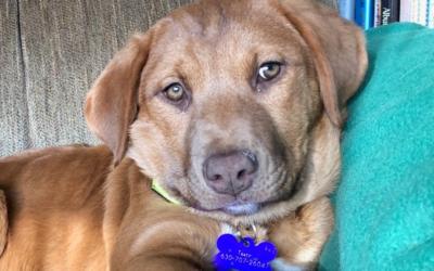 Meet Rikka-adoption pending