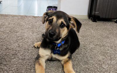 Meet Loki