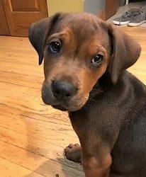 Meet Sedona