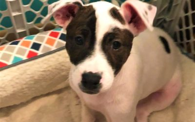Meet Penelope-I will be at Petco on Saturday from 1030-2!
