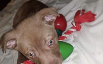 Meet Tiki-adoption pending