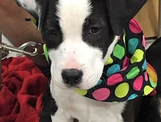 Meet Bree