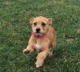 Meet Chai-adoption pending