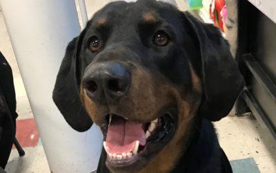 Meet Cooper-adoption pending