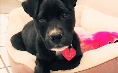 Meet Kat-adoption pending