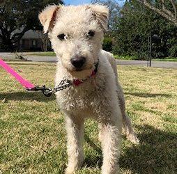 Meet Vail-adoption pending