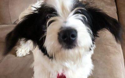Meet Winnie-adoption pending
