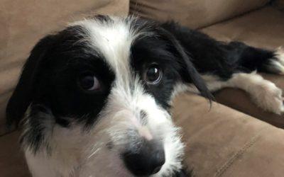 Meet Wyatt-adoption pending