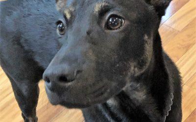 Meet Calypso-adoption pending