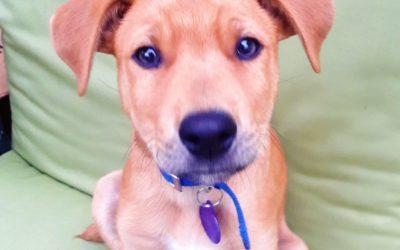 Meet Desmond-adoption pending