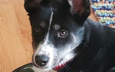 Meet Sasha-adoption pending