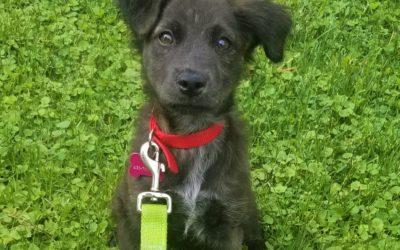 Meet Savannah-adoption pending