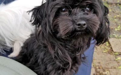 Meet Zippy-adoption pending