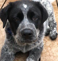 Meet Fritz