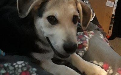 Meet Kato