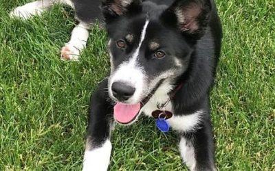 Meet Sasha-adopted